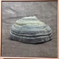 """""""Polypore"""" (Jean-Marc BIRY) Tirage sur aludibon encadré 15x15cm"""